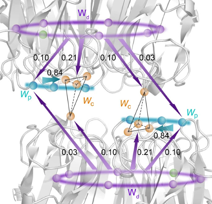A scheme of excitation-energy-transfer networks in UVR8